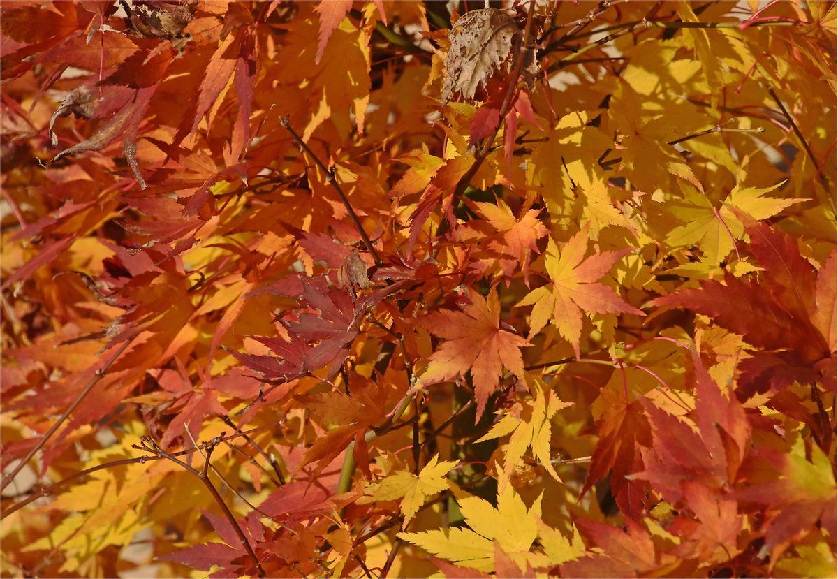 mywort - Wenn Blätter bunt sich färben ...