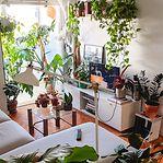 Plantas. Como a pandemia tornou as casas dos portugueses mais verdes