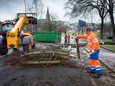 Un arbre est tombé lundi sur la rue à Hollerich.