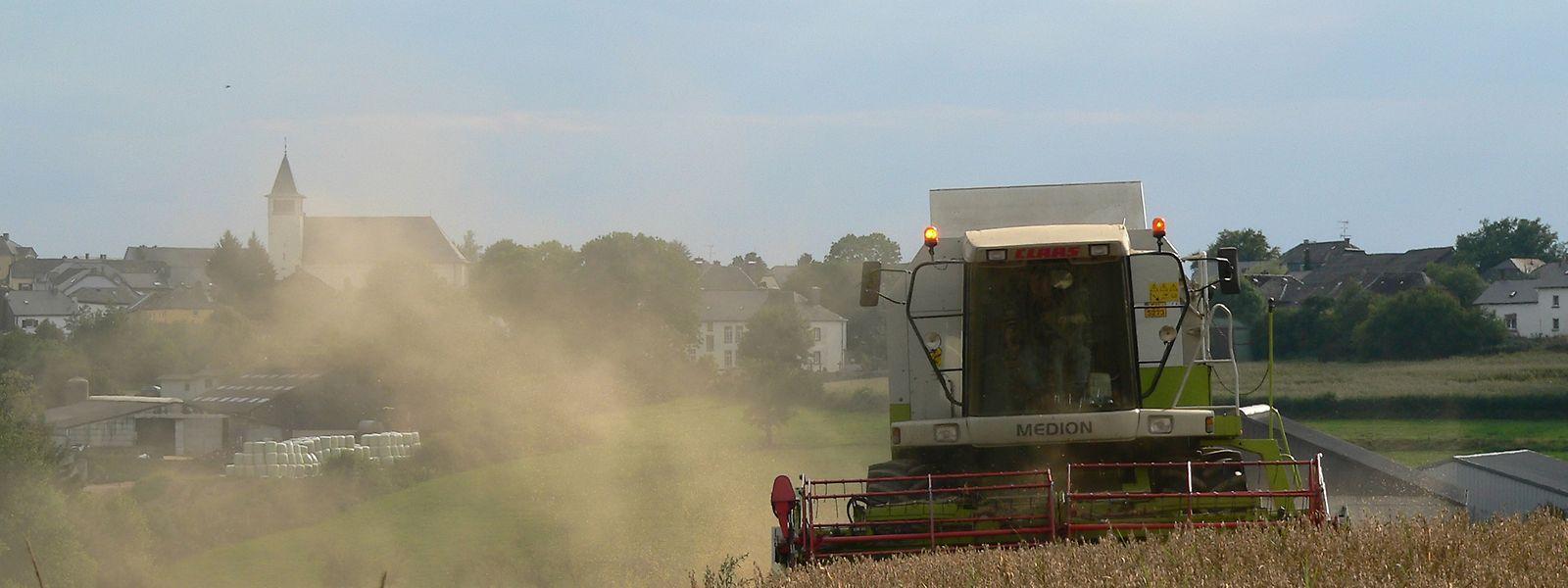 Überall im Land wird im August das Getreide geerntet.