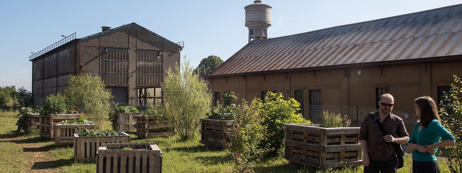 Die Hochbeete stehen unweit des Wasserturms. Wenn bis auf diesem Gelände gebaut wird, können sie umplatziert werden.