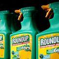 Le glyphosate est le principal pesticide contenu dans le Roundup.
