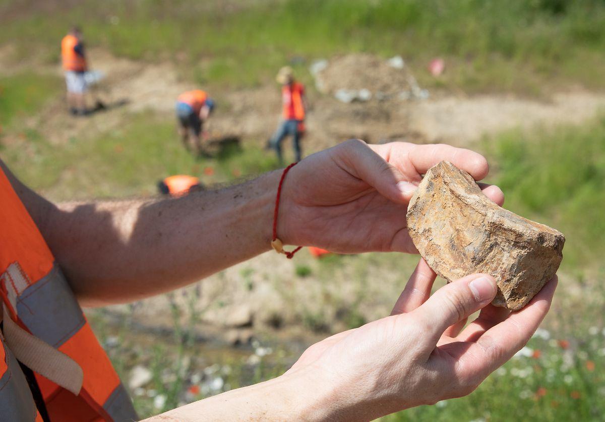 Knochenreste wie dieses Wirbelfragment liefern den Forschern wichtige Erkenntnisse über die Beschaffenheit des Tieres.