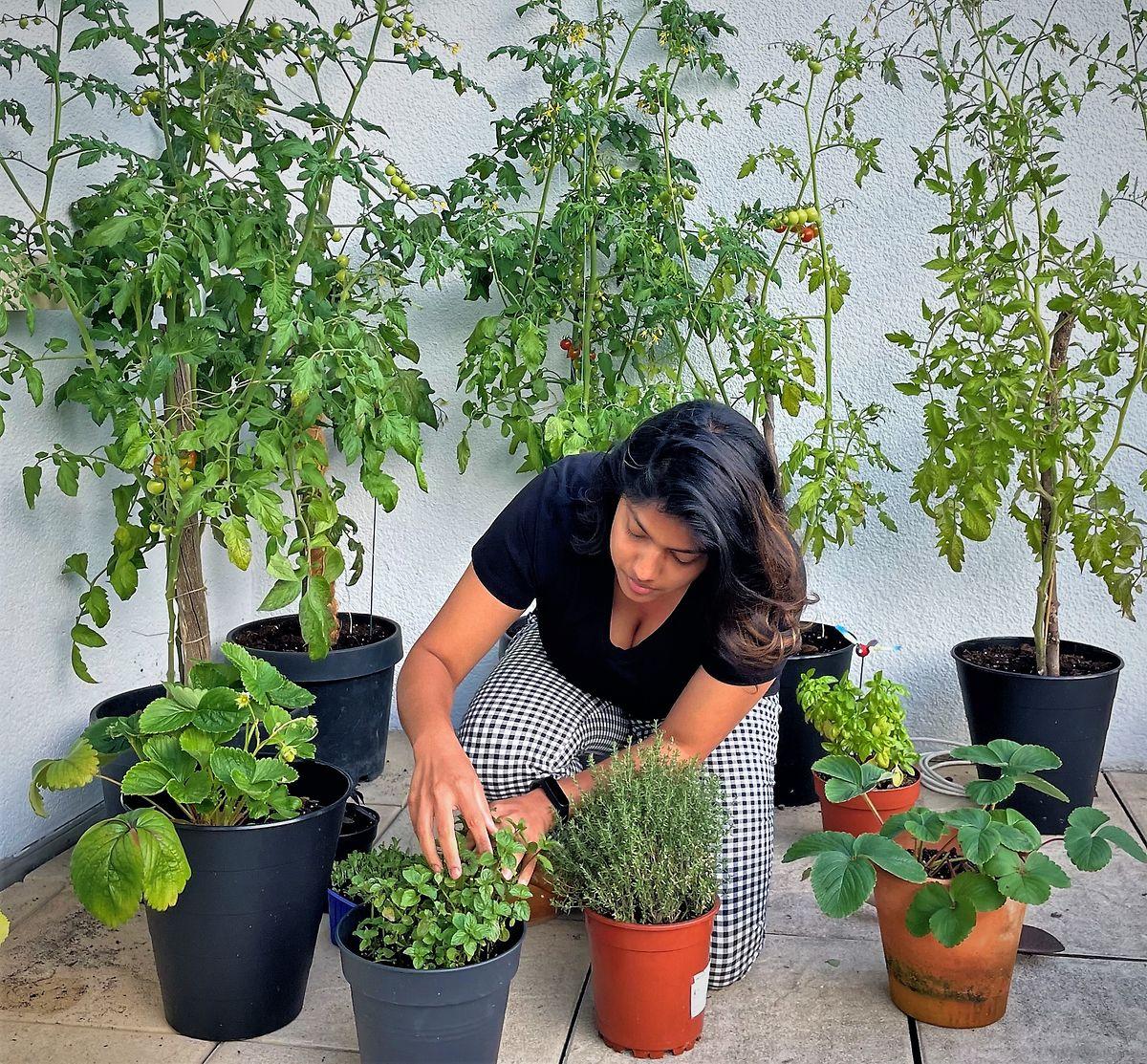 Tomatoes were balcony gardener Neha Poddar's first success