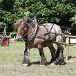 Ardenner-Pferd