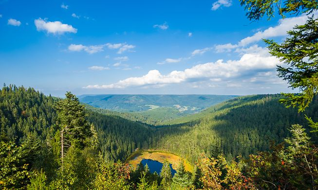 The Black Forest in Germany