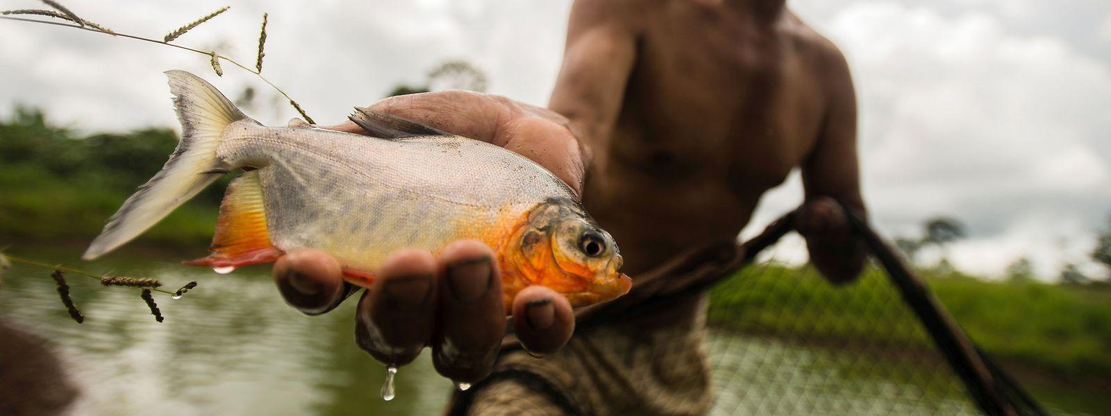 30% des pêches mondiales sortent trop de poissons de l'eau. Il est impossible de lutter parce que 71% des bateaux impliqués battent pavillon de complaisance et ont des liens avec les paradis fiscaux.