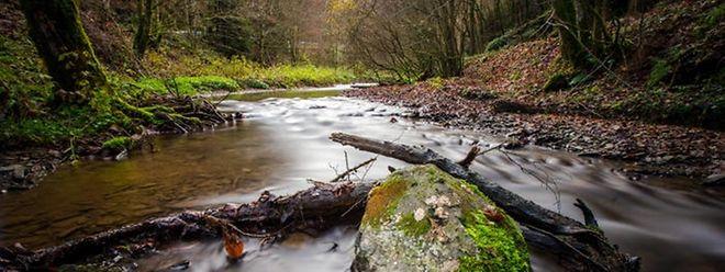 Der Schutz des Trinkwassers wird billiger als die spätere Aufbereitung.