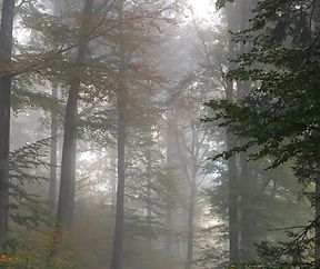 Vom Nebel umhüllt