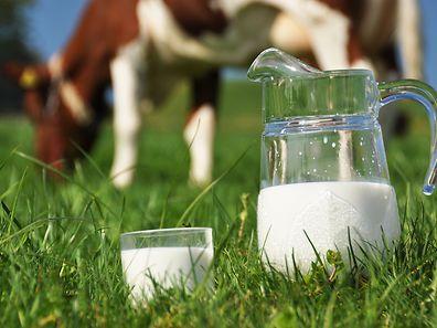 Milch - ein wahrer Muntermacher.