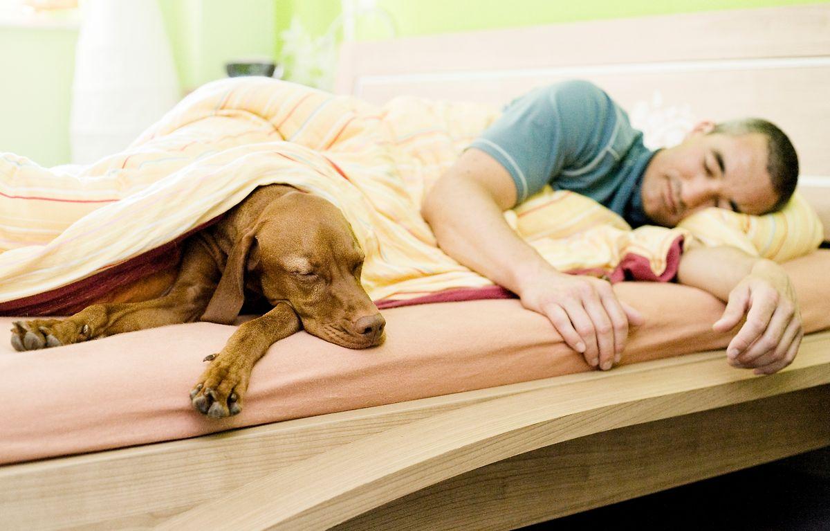 Schläft der Hund immer mit seinem Herrchen im Bett, kann das zu Rangproblemen führen.