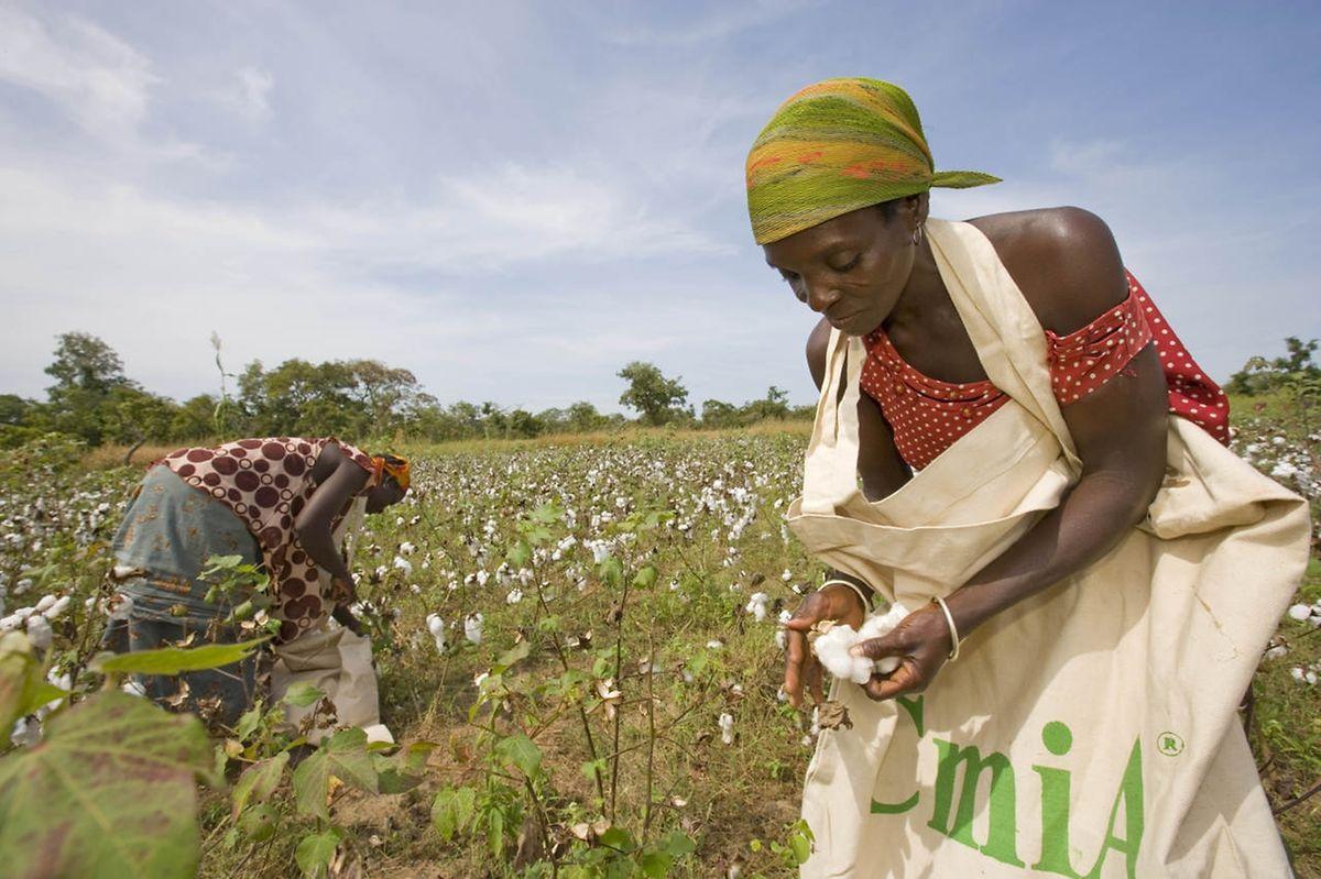 """Das Modeunternehmen Otto und 30 andere internationale Firmen arbeiten zum Beispiel mit derInitiative """"Cotton made in Africa"""" zusammen. Sie will die Lebensbedingungen der Baumwollbauern in Subsahara-Afrika nachhaltig verbessern."""