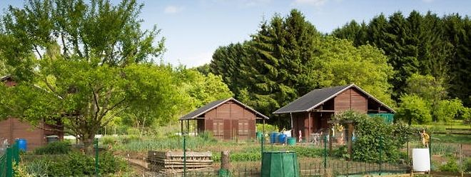 Rechte und Pflichten haben die Kleingärtner aller Gartensiedlungen.Wer sich nicht an die Regeln hält, verliert seine Parzelle.