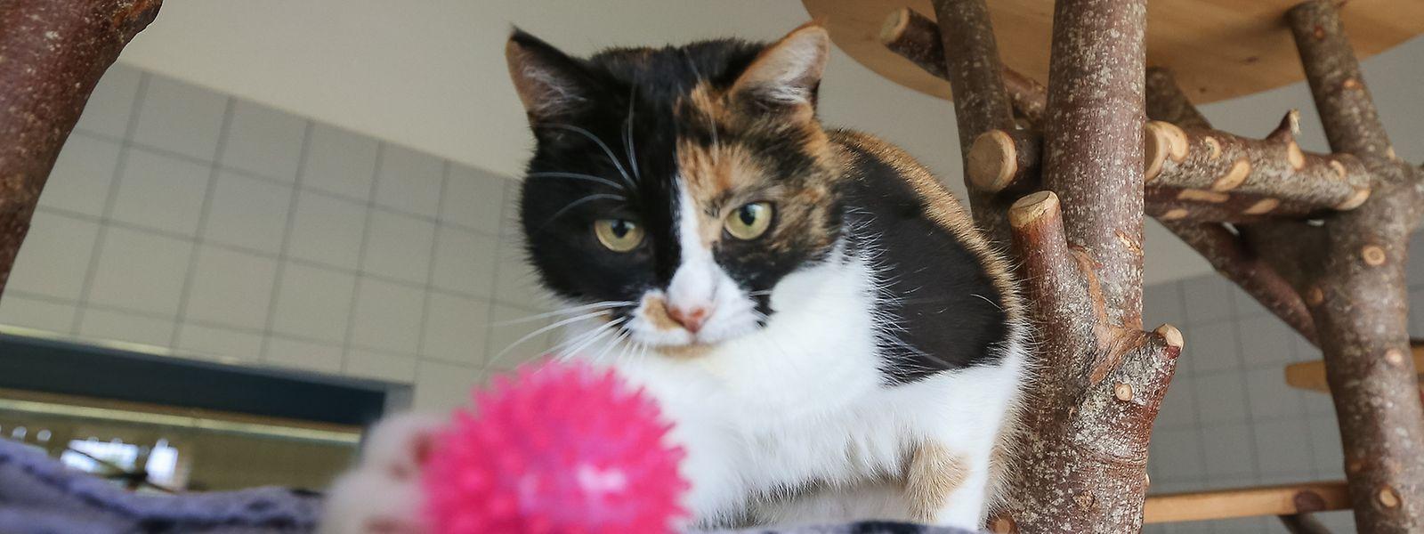 Erst vor kurzem wurde der Katzenbereich im Tierasyl Gasperich renoviert.