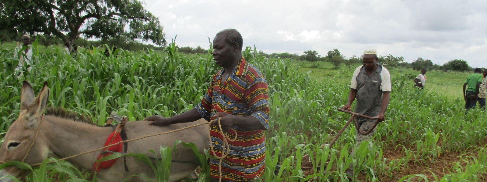 In Westafrika, wie hier in Burkina Faso, lebt ein großer Teil der Bevölkerung von der Landwirtschaft. Wegen Corona haben die Bauern aber derzeit keinen Zugang zu ihren Feldern.