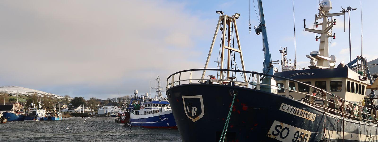 Der Fischerhafen von Greencastle in Irland.