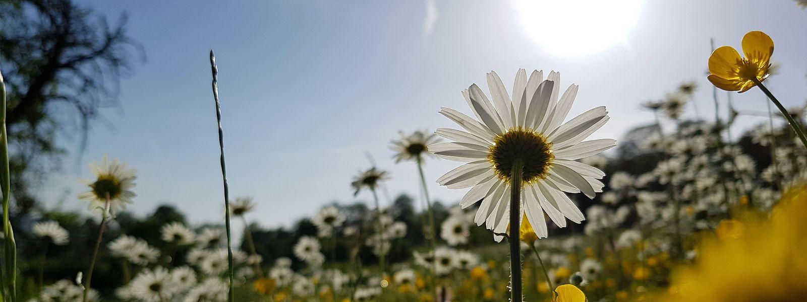 Echte Blumenwiesen sind ein Paradies für Insekten.