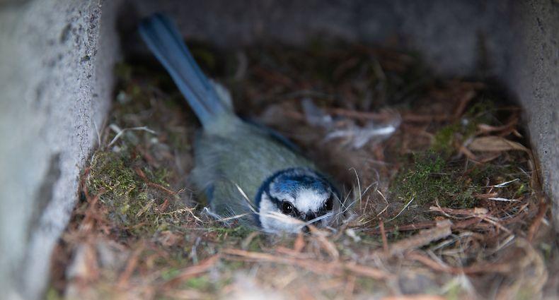 Lokales, Fréijoer an der Schlammwiss, Natur, Vogel, Ökologie, Biodiversität, Foto: Chris Karaba/Luxemburger Wort