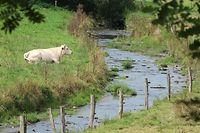 Landwirtschaft Rinder Limousin Ardennen Ösling / Foto: Nico MULLER