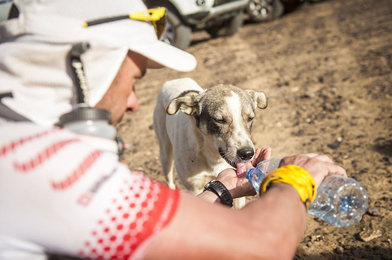 """Ein Teilnehmer des """"Marathon des Sables"""" in der Sahara teilt sein Wasser auf der dritten Etappe mit dem Hund Cactus"""