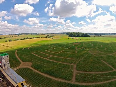 An aerial view of the maize maze in Limpach