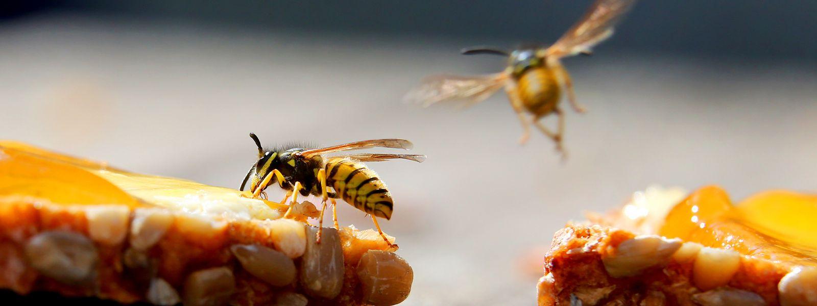 Süße Speisen, etwa ein Marmeladenbrot, sind für Wespen besonders anziehend.