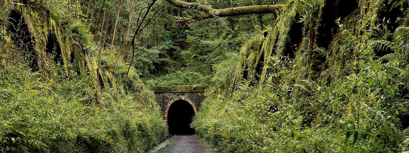 L'intérieur du tunnel offre aux chauves-souris des conditions de vie idéales. Mais nul visiteur humain n'y est autorisé.