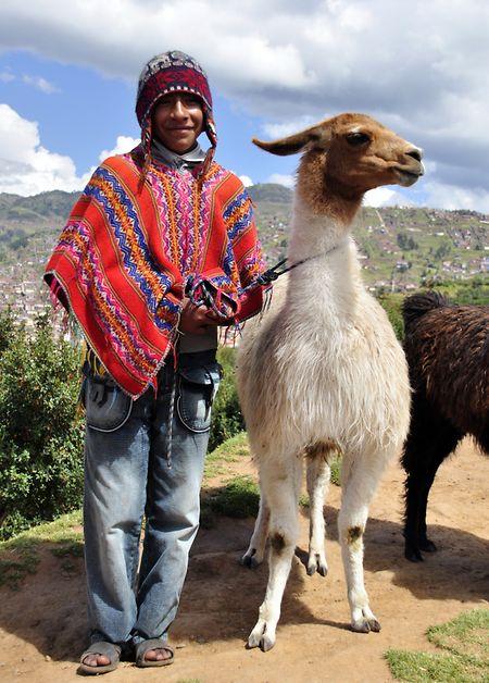 Lamas werden vor allem als Lasttiere genutzt.