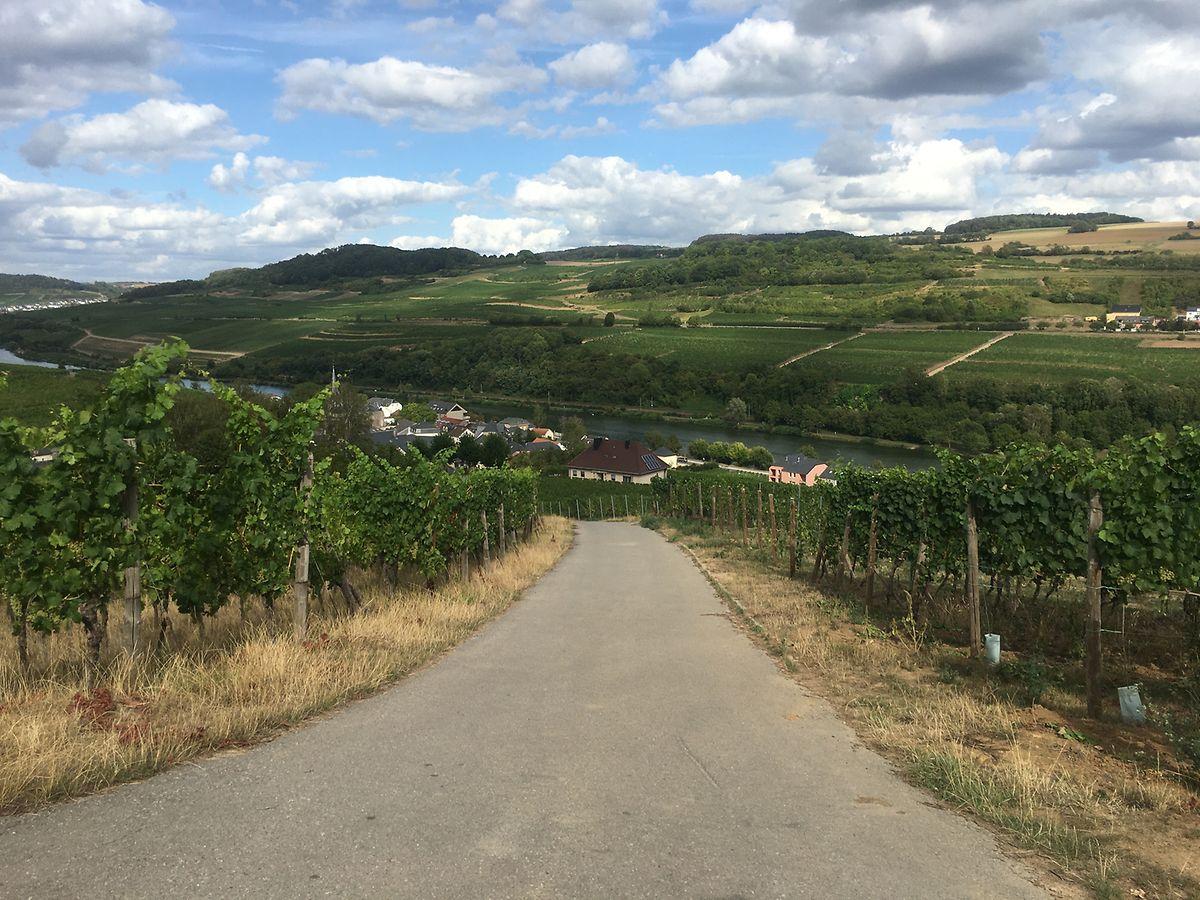 In Ahn geht es vorrangig durch die Weinberge - den schönen Blick gibt's inklusive.