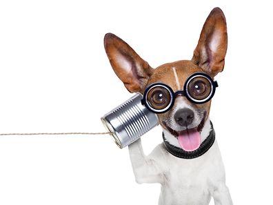 Les chiens comme les humains utilisent l'hémisphère gauche du cerveau pour interpréter les mots et des régions de l'hémisphère droit pour analyser l'intonation.