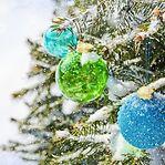 Pinheiro de Natal. Artificial ou natural?