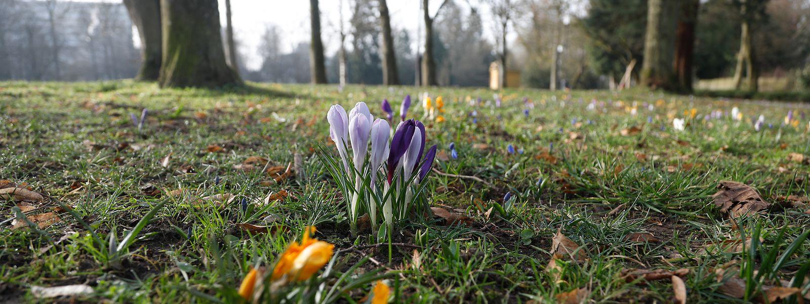 Frühlingserwachen: Das Wetter zeigte sich im März meist von einer freundlichen Seite. Gegen Ende des Monats war es gar überdurchschnittlich warm.