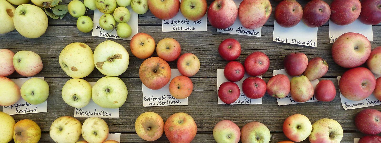 Äpfel können je nach Sorte hellgrün, goldig, dunkelrot oder gar mehrfarbig sein.
