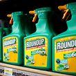L'homologation du glyphosate, substance utilisée dans les pesticides, court jusqu'au 30 juin.