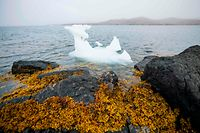 """(FILES) In this file photo taken on August 14, 2019, a piece of ice floats near Kulusuk (also spelled Qulusuk), a settlement in the Sermersooq municipality located on the island of the same name on the southeastern shore of Greenland. - The melting of Greenland's ice cap has gone so far that it is now irreversible, with snowfall no longer able to compensate for the loss of ice even if global warming were to end today, according to researchers. """"Greenland's glaciers have passed a tipping point of sorts, where the snowfall that replenishes the ice sheet each year cannot keep up with the ice that is flowing into the ocean from glaciers,"""" said a statement from Ohio State University, where several authors of a study published  August 13, 2020 in Communications Earth and Environment are based. (Photo by Jonathan NACKSTRAND / AFP)"""