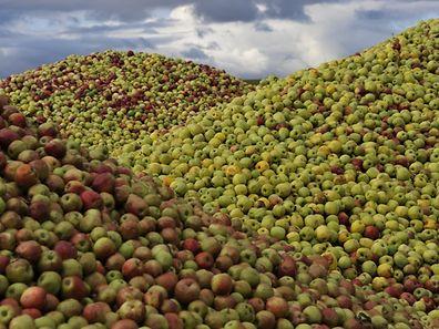 Berge von Äpfeln in Urspelt