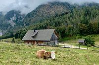 Alpine Idylle:Der Nationalpark Kalkalpen ist Oberösterreichs einziger Nationalpark.