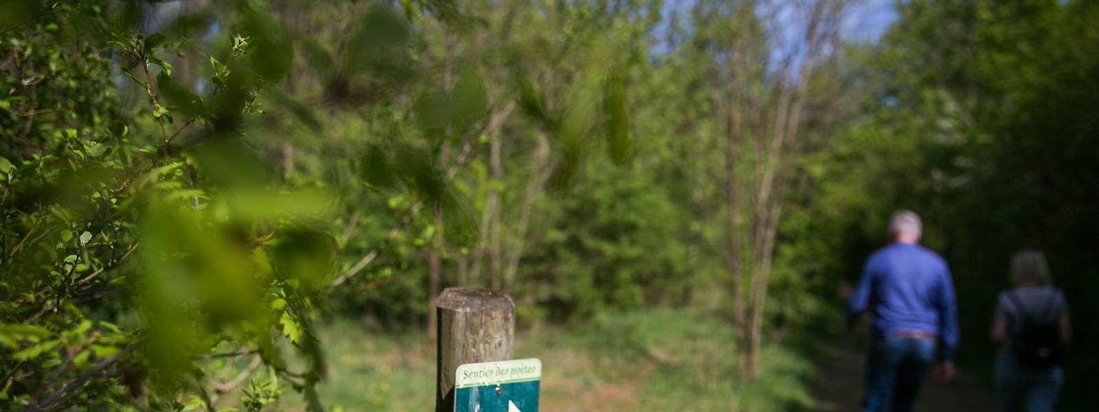 """In Luxemburg ist der """"Sentier des Poètes"""" in Petingen noch recht unbekannt. Dabei lohnt sich eine Wanderungen zwischen grünen Bäumen und Poesie."""
