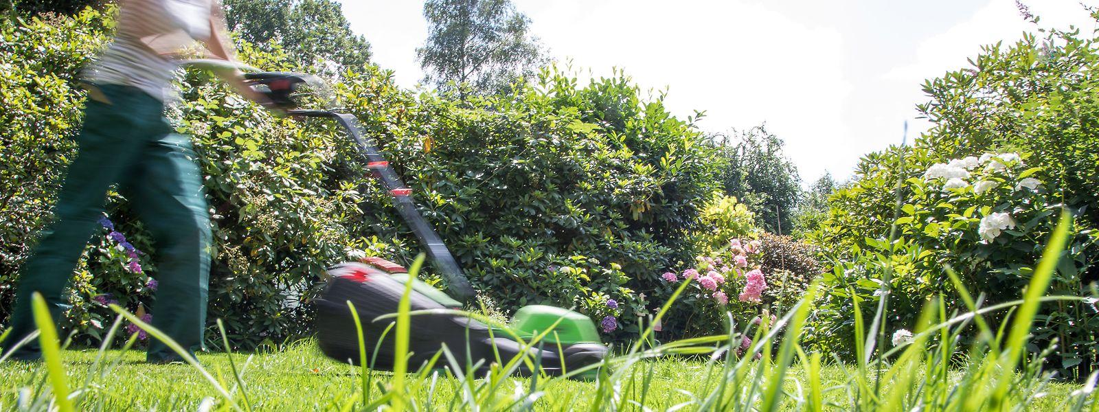 Bei Trockenheit kann man den Rasen getrost etwas höher wachsen lassen. Dann können sich die Pflanzen gegenseitig besser Schatten spenden.