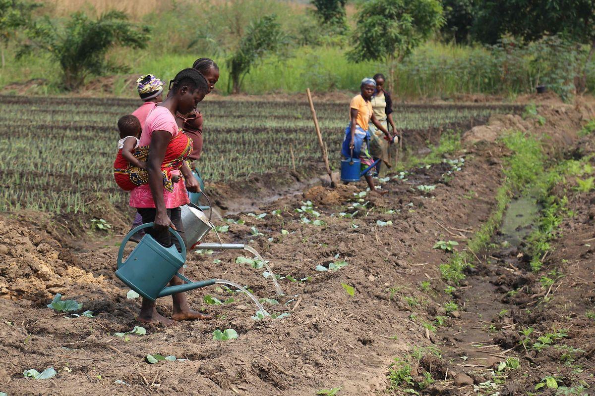 Feldarbeiter im Kongo: Durch den Klimawandel sinken in vielen Regionen der Welt die Ernteerträge.