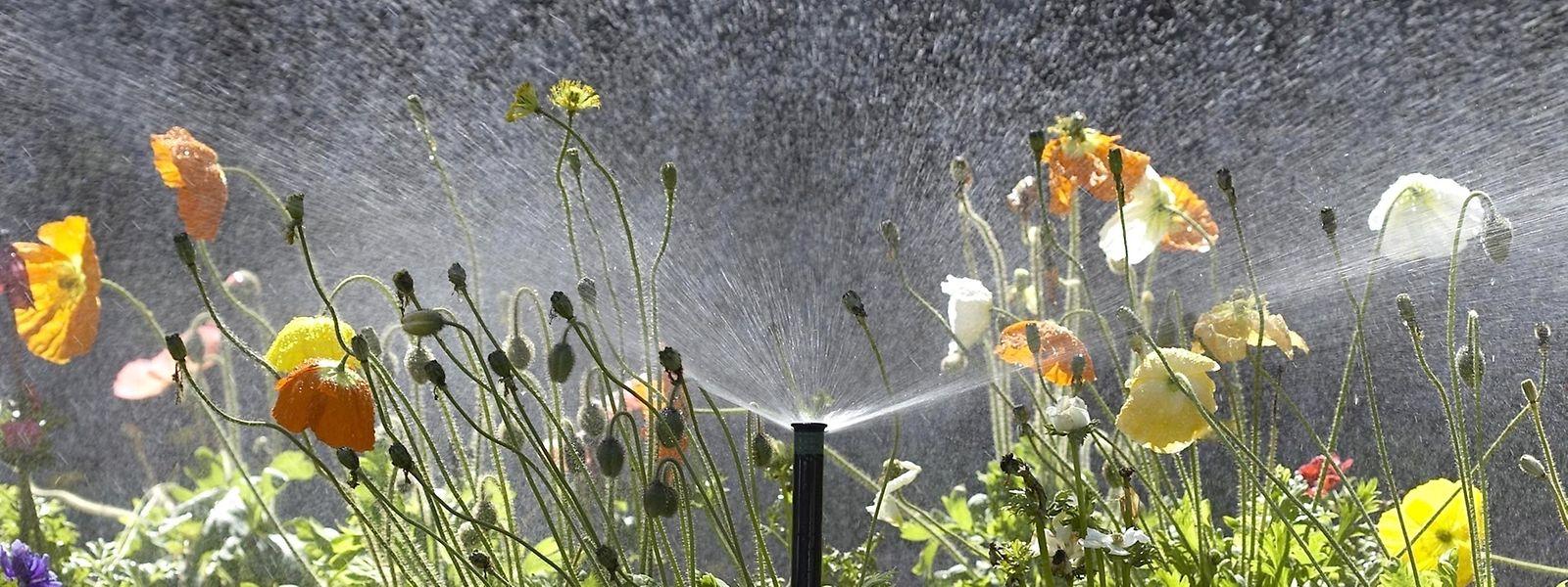 Si elle est parfaite pour arroser le jardin, le nettoyage ou les toilettes, l'eau de pluie, en revanche, ne doit pas être utilisée pour cuisiner ou pour les soins corporels.