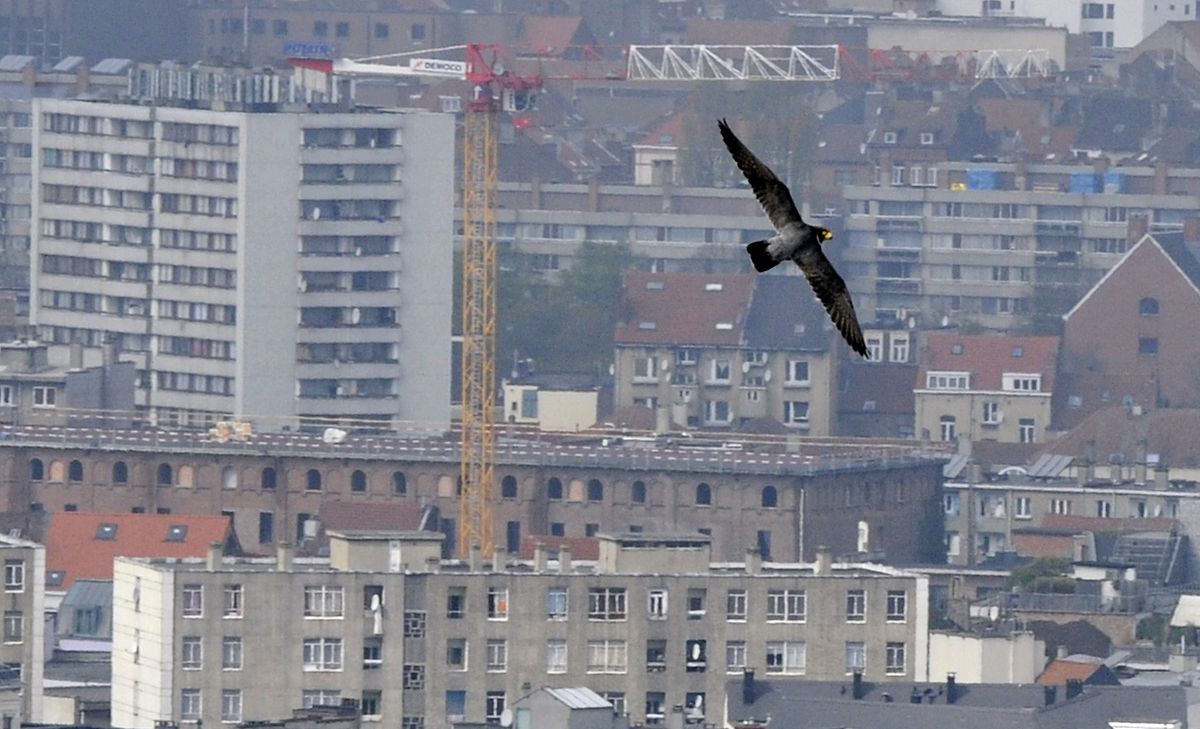 La capitale belge entend réduire la consommation d'énergie et les émissions de CO2 engendrées par un parc immobilier souvent vétuste.