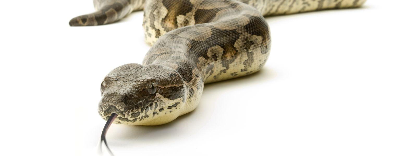 Unter den Tieren befanden sich neben Schlangen auch Skorpione und Tausendfüßler.