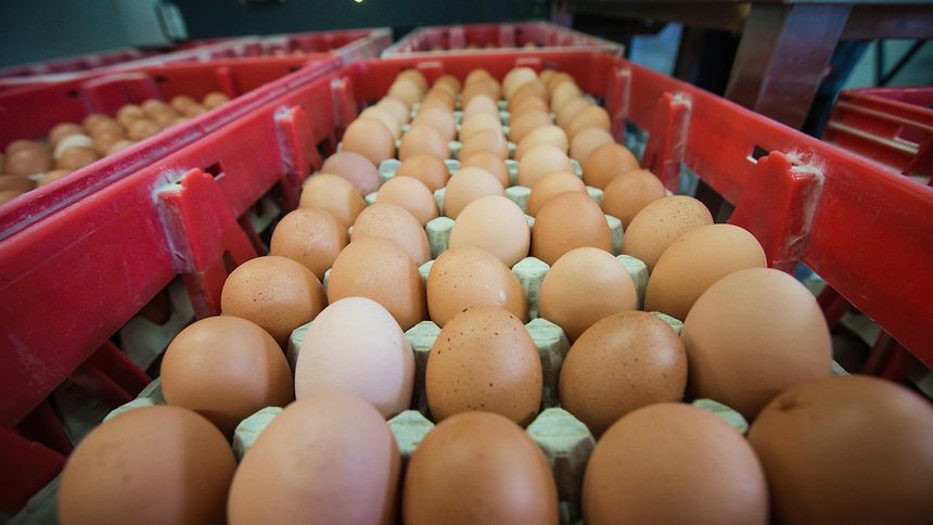 Dutch farmers 'powerless' on contaminated eggs