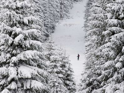 A skier stands in a snowy forest near Braunlage in the Harz region, central Germany, on January 4, 2017.