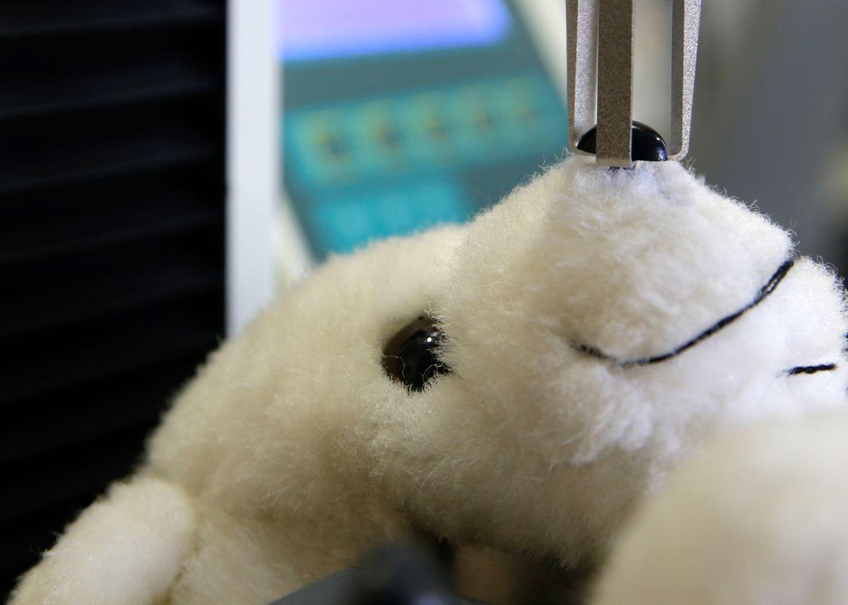 Test de résistance d'un jouet pour enfants: le nez de l'ourson est malmené avec la force d'un enfant en bas âge. S'il venait à se détacher, il pourrait être avalé et, dans le pire des cas, étouffer un bambin.