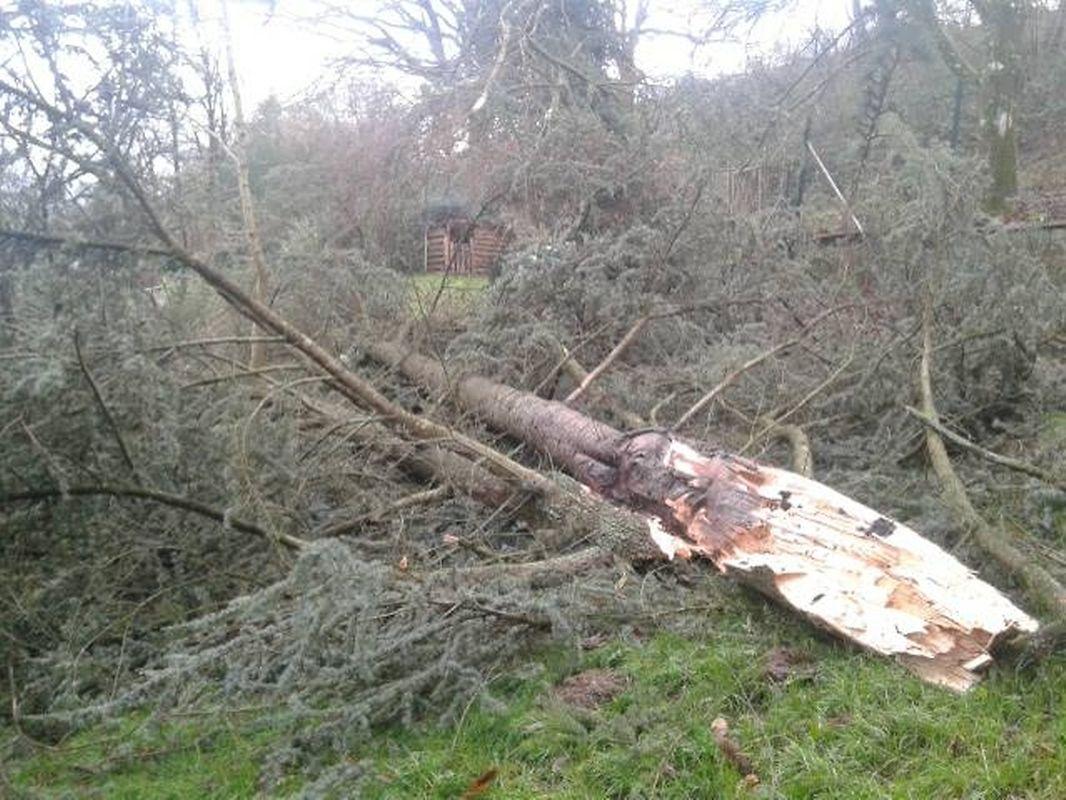 Viele Bäume hielten den Sturmböen nicht stand.