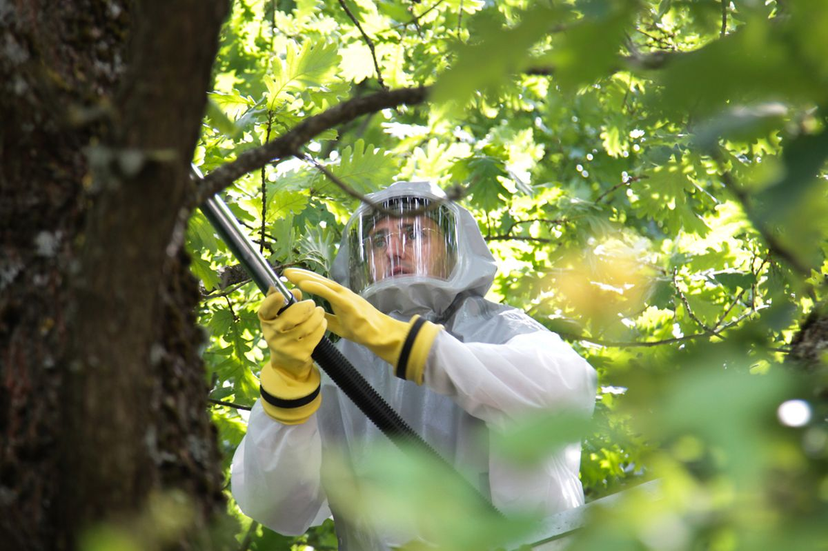 La méthode de lutte la plus fréquente reste la pulvérisation via une intervention humaine directe.
