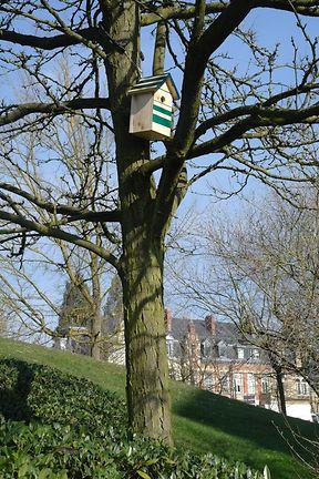 Hoch oben im Baum angebracht, bietet der Nistkasten den Vögeln Schutz vor Fressfeinden.