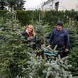 27.11. Steinsel / Weihnacthsbäume zu vermieten / Jardinage Becker / foto:Guy Jallay